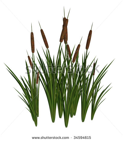 Cattails cliparts.