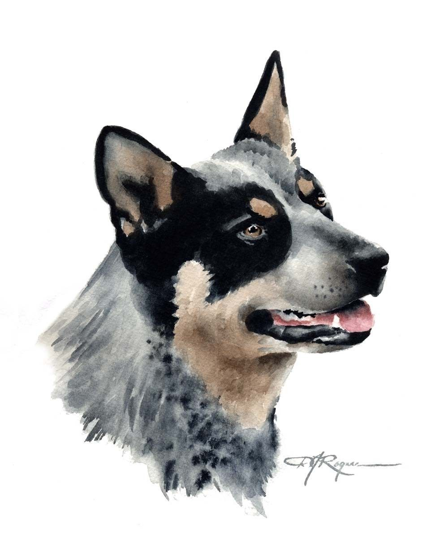 AUSTRALIAN CATTLE DOG Art Print by Artist D J Rogers.