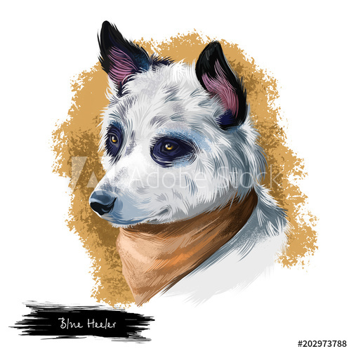 Australian Cattle Dog, Cattle Dog, Blue Heeler dog digital art.