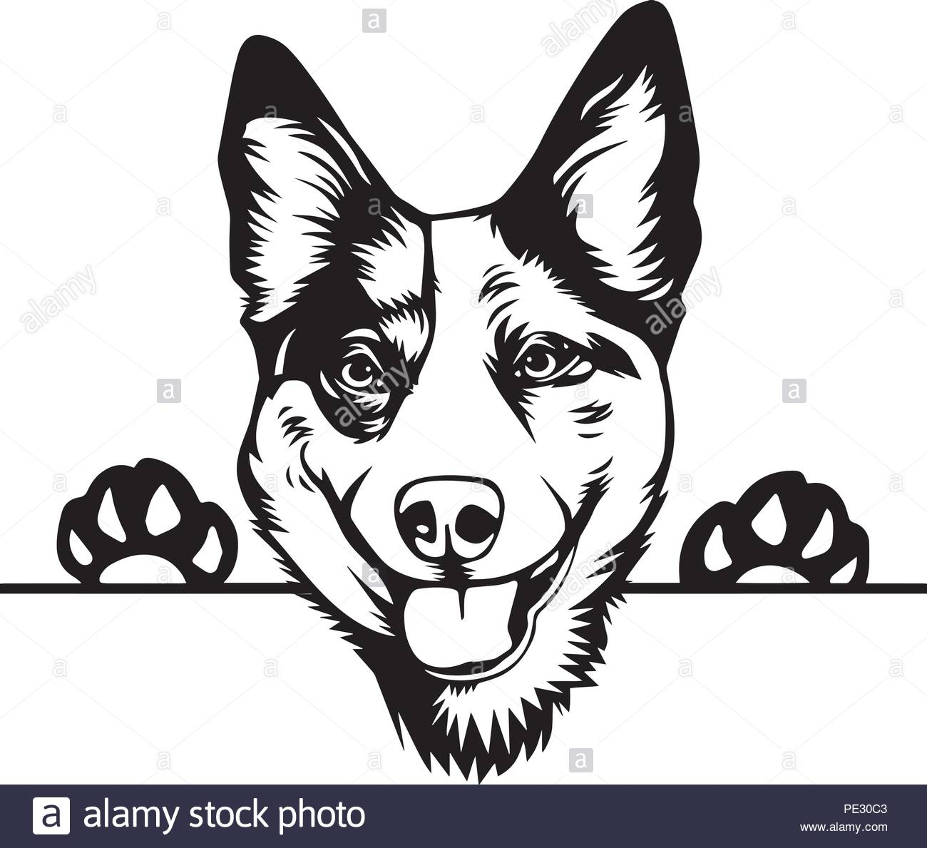 Australian Cattle Dog Breed Pet Puppy Isolated Head Face Stock.