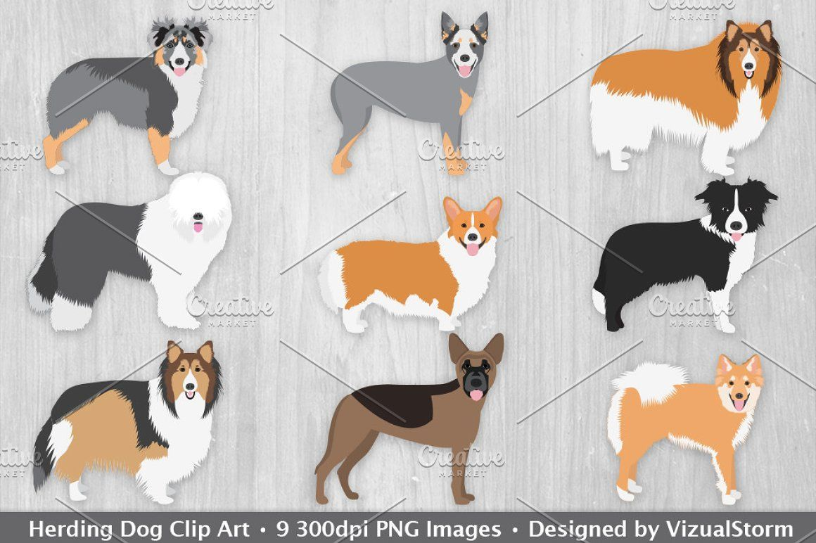 Herding Dog Clip Art Illustrations australian shepherd.