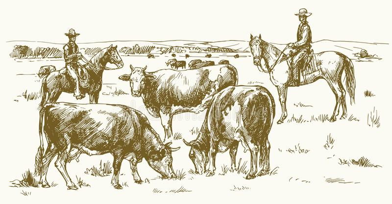 Cattle Drive Stock Illustrations.