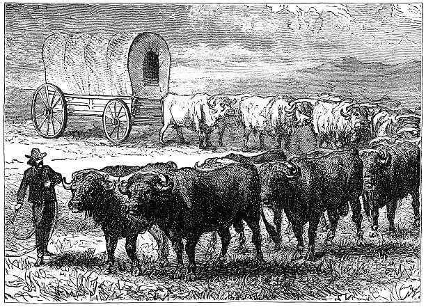 19 Cattle Drive Clip Art, Vector Graphics and Illustrations.