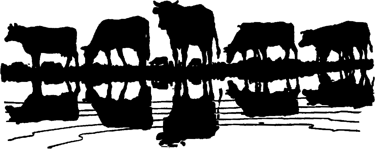 Cattle Drive Clipart Show Cattle Clipart Cattle Herd Clipart Cattle.