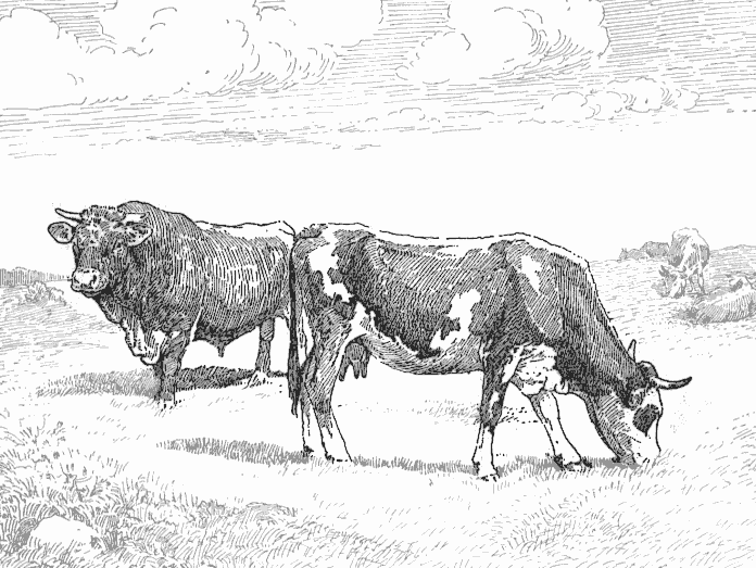 Cattle Clip Art Download.