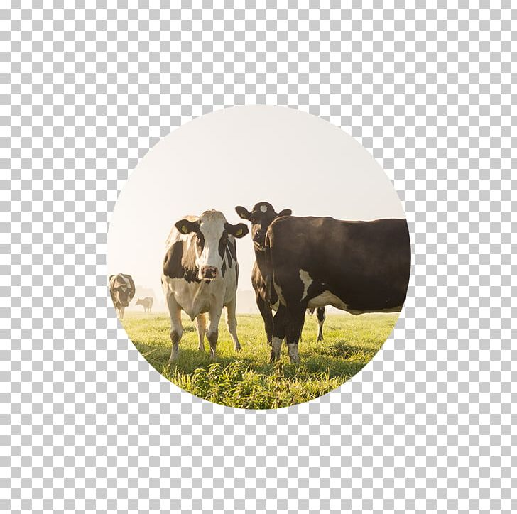 Cattle Agriculture Dairy Farming Business PNG, Clipart, Agriculture.