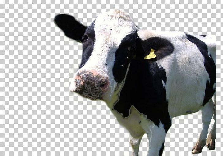 Holstein Friesian Cattle Hereford Cattle Farm Animals: Cows Dairy.