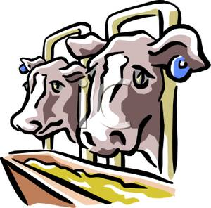 Cows At a Trough Clip Art Image.