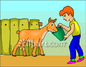 Feeding Animals Clipart