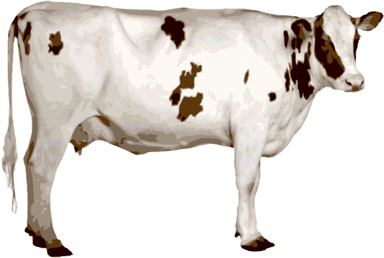 Cows Png , (+) Pictures.