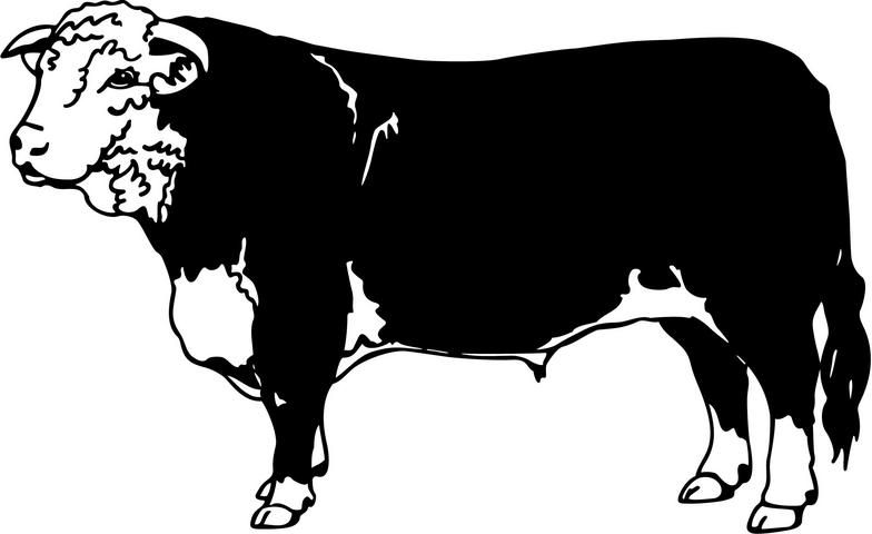 Hereford Cattle Clip Art.