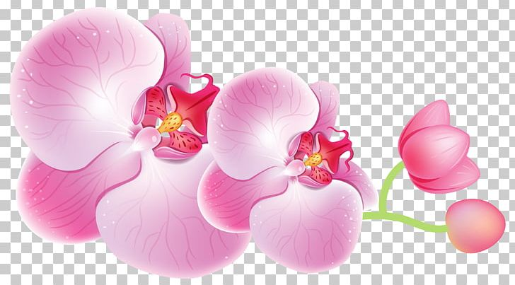Cattleya Orchids Flower PNG, Clipart, Blossom, Boat Orchid.