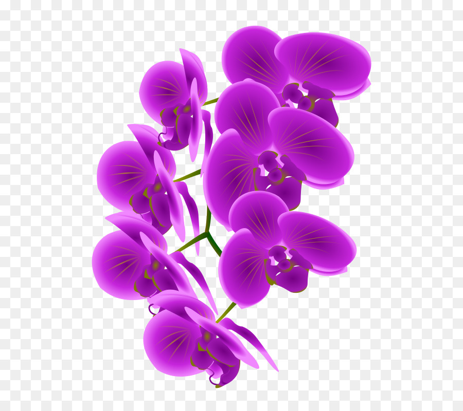 Orchid Flower.