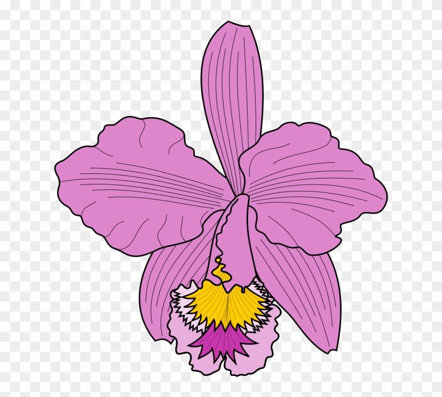 Petal Clipart Cattleya Orchids Moth Orchids.