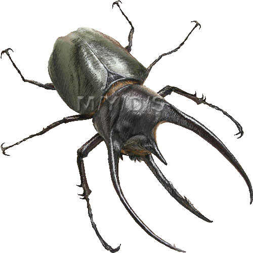 Caucasus Beetle clipart graphics (Free clip art.