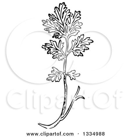 Clipart of a Black and White Woodcut Herbal Medicinal Feverfew.