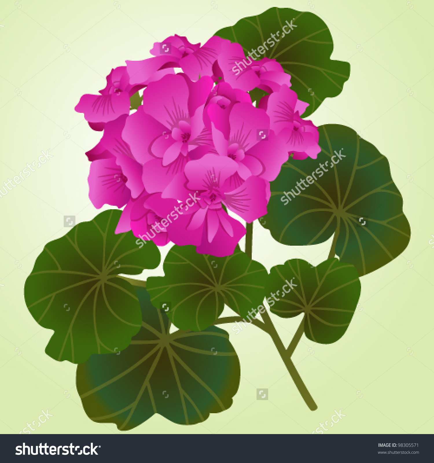 Flowering Sprig Of Lilac Geranium On A Light Background Stock.