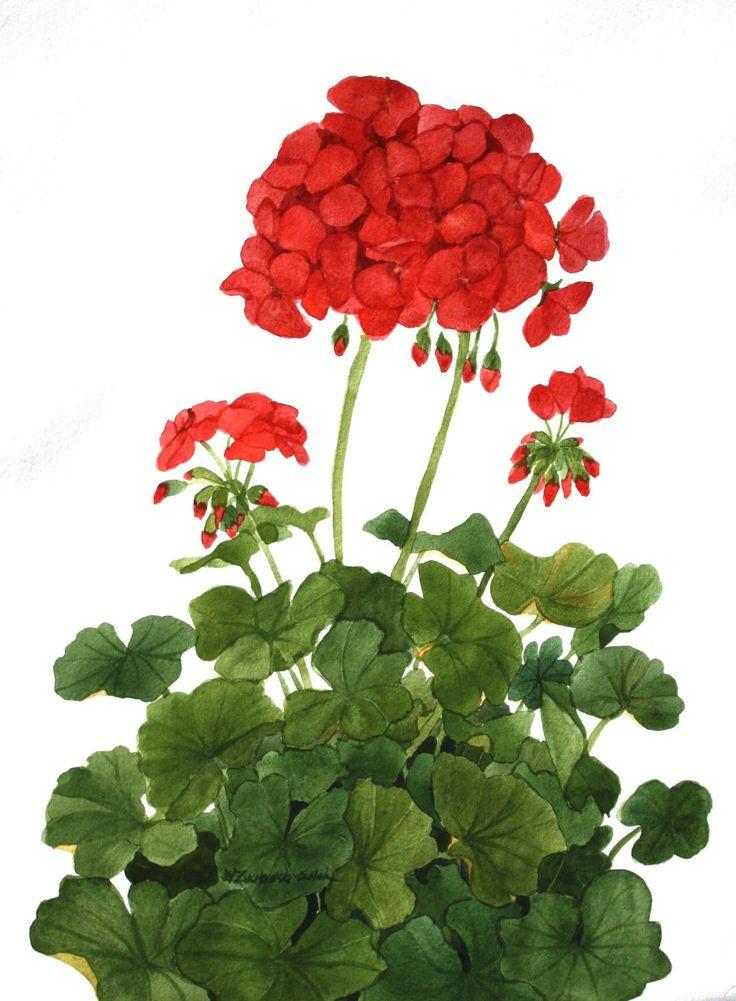 1000+ images about Botanical Illustration III on Pinterest.