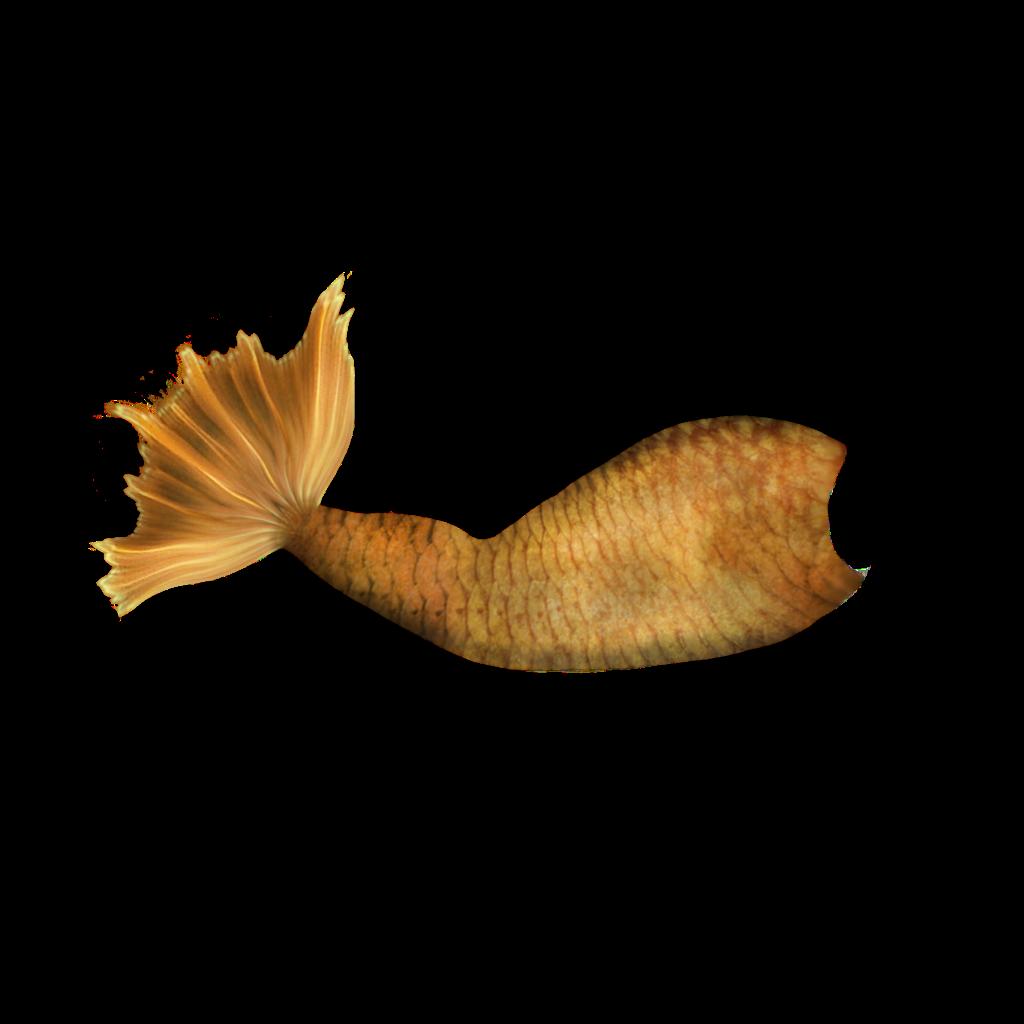 cauda sereia fish.