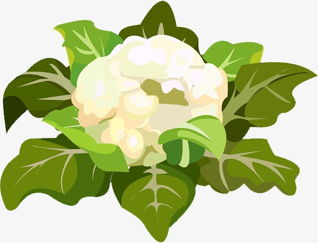Cauliflower, White, Green Leaves PNG Transparent Image and Clipart.
