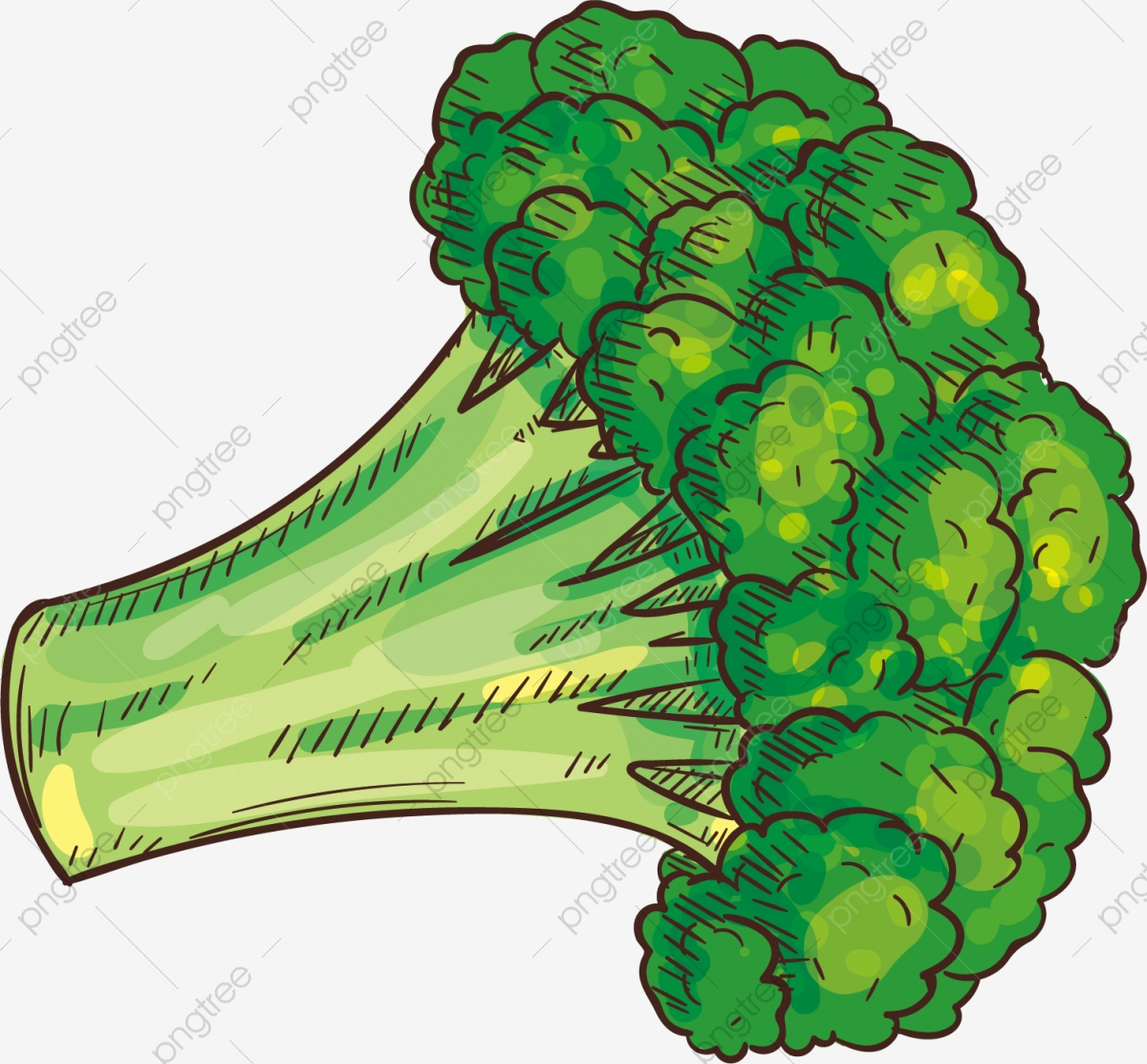 Cauliflower, Vegetables, Food PNG Transparent Clipart Image and PSD.