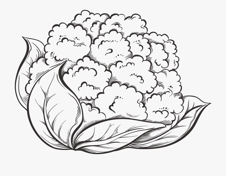 Coral Drawing Cauliflower.