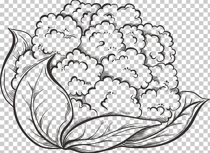 Cauliflower Drawing Vegetable Broccoli PNG, Clipart, Art.