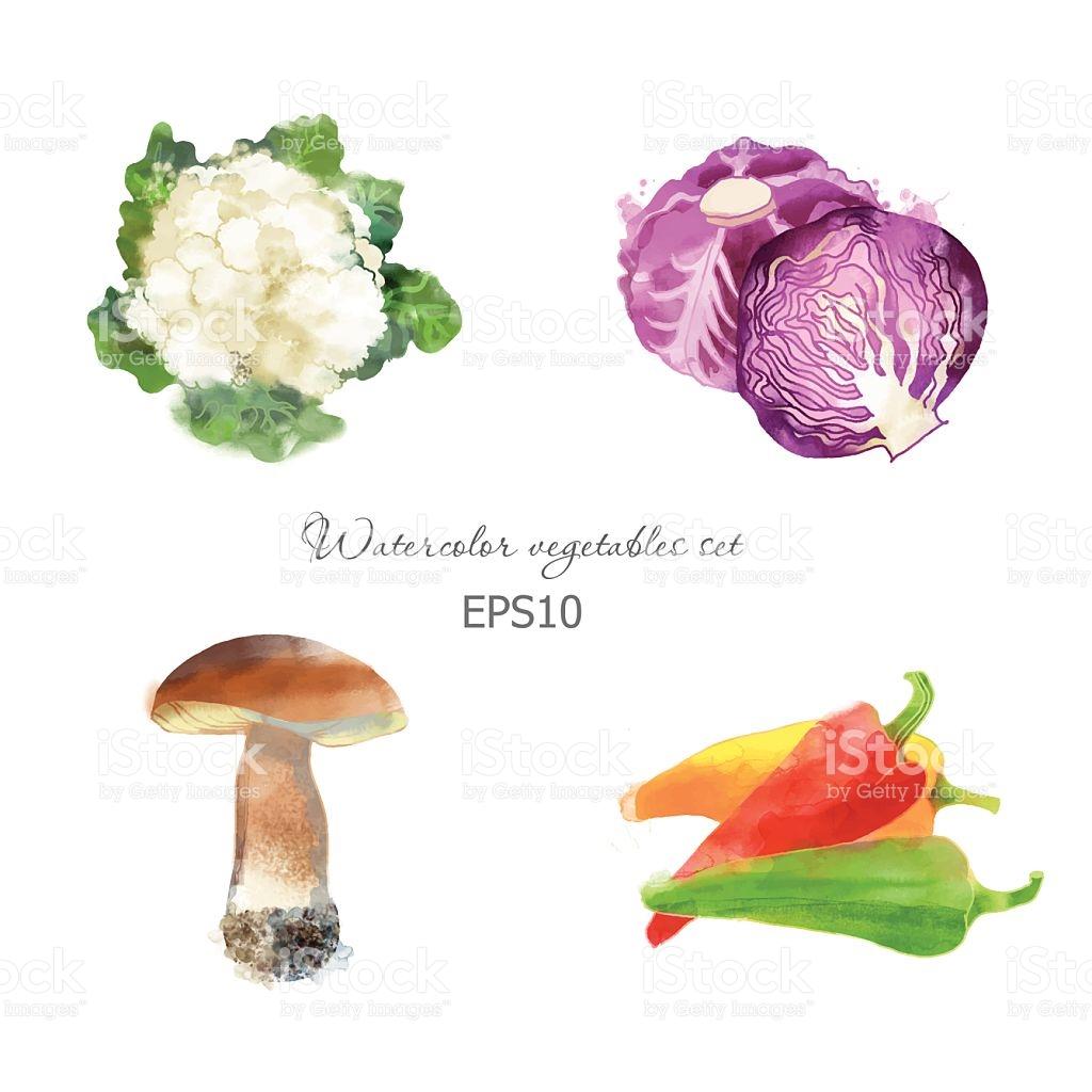 Cauliflowerred Cabbage Mushroom Pepper stock vector art 523616643.