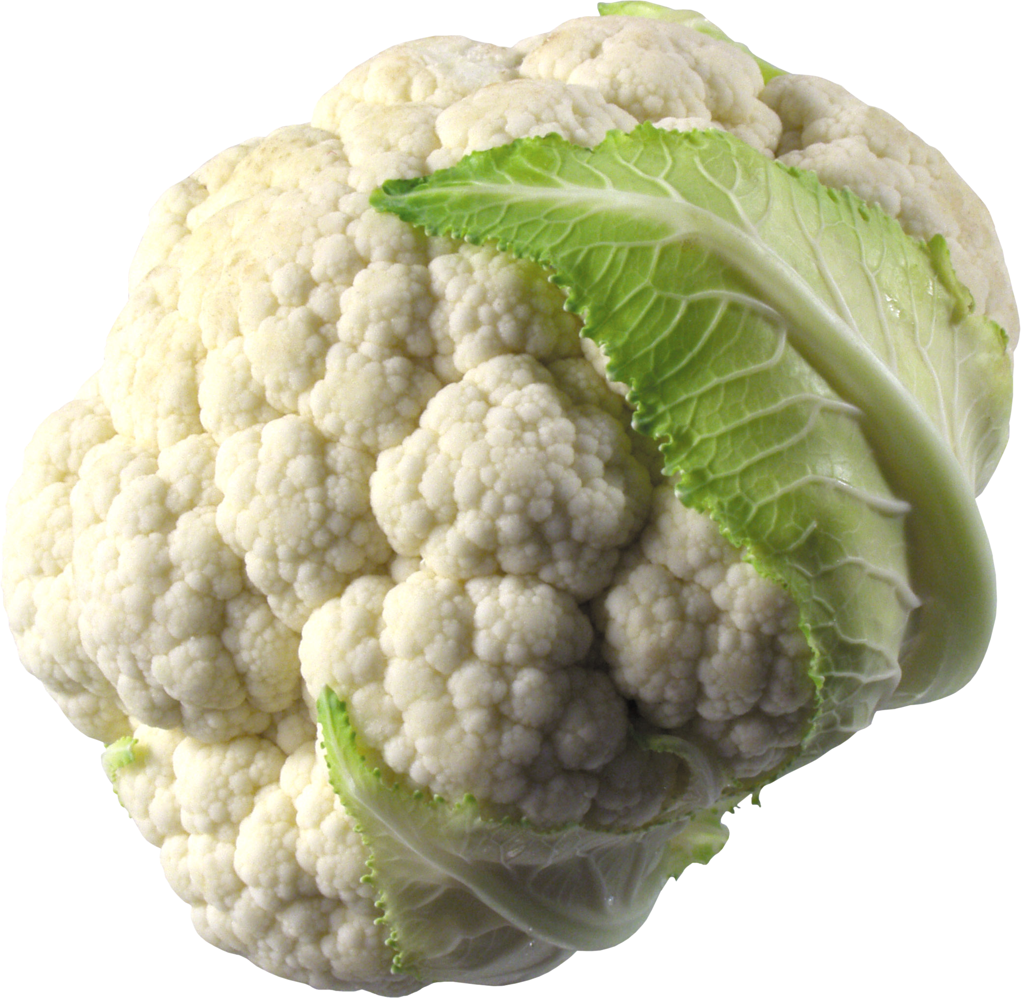 Cauliflower PNG images free download.