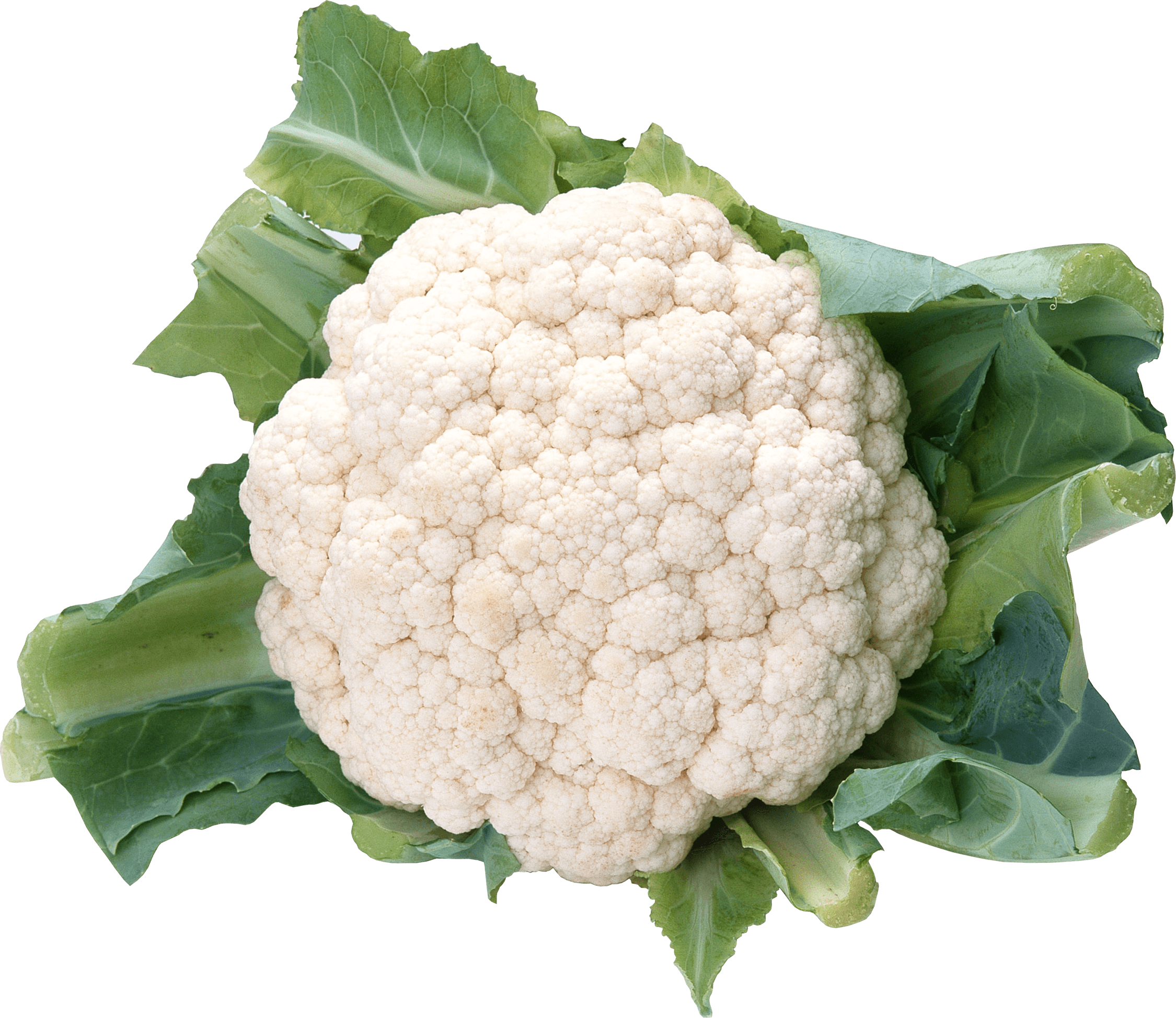Cauliflower Small transparent PNG.
