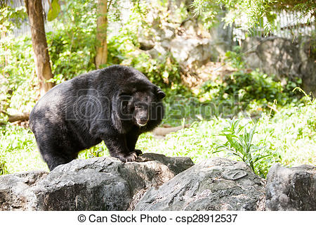 Stock Photos of Black bear standing on stone, alert and cautious.