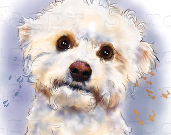 Bichon wall art.