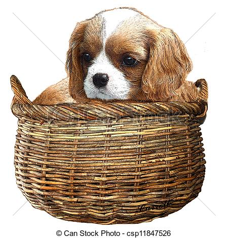 Cavalier king charles spaniel puppy Clipart and Stock.