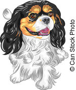 Cavalier king charles spaniel Clipart and Stock Illustrations. 57.