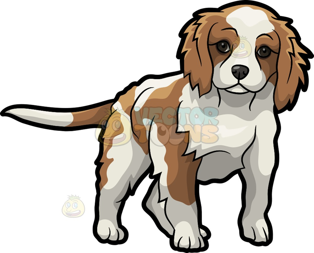 Cavalier king charles clipart.