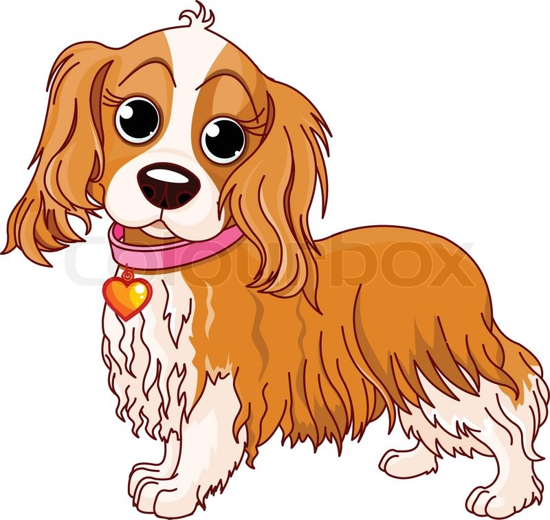 Illustration of Cavalier King Charles Spaniel.