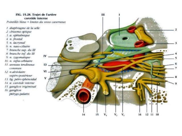 Cavernous sinus 360°.