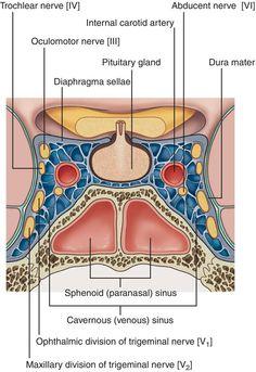Location of Cavernous Sinus.