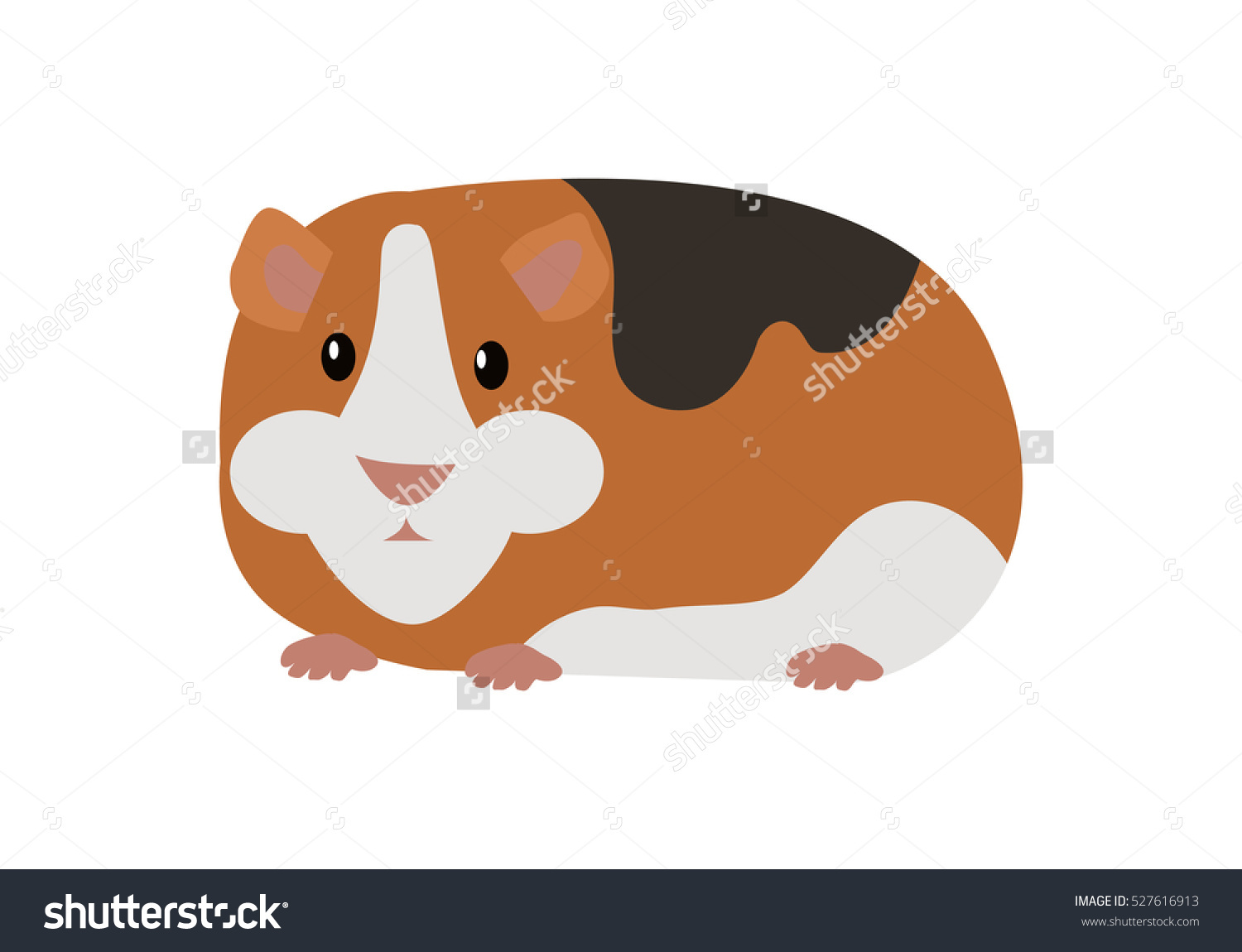 Guinea Pig Cavia Porcellus Cavy Domestic Stock Vector 527616913.