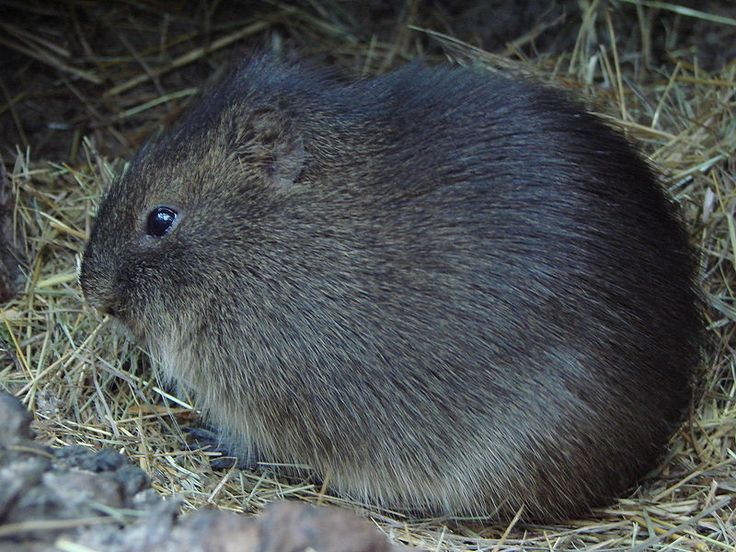 1000+ images about Rodents on Pinterest.