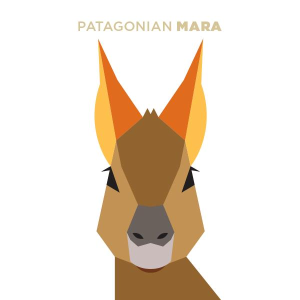 1000+ images about Mara on Pinterest.