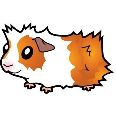 Résultats de recherche d'images pour « guinea pig clipart.