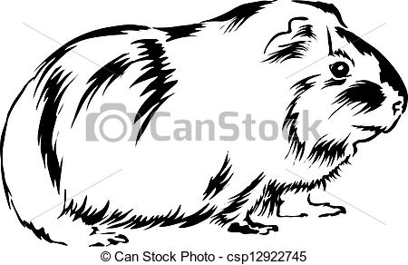 Guinea pig Clip Art and Stock Illustrations. 396 Guinea pig EPS.