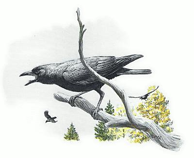 Paul's Scribblings: An Alarm of Crows.