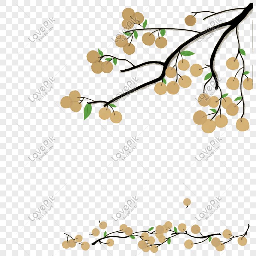 cây mai xanh thiên nhiên cây mai vàng cây mai vàng Hình ảnh.