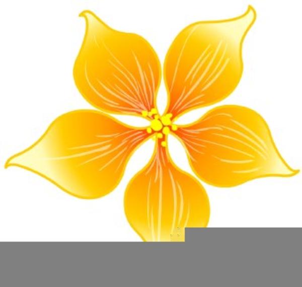 Hoa Mai Clipart.