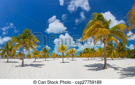 Pictures of Palm trees on the white sand. Playa Sirena. Cayo Largo.