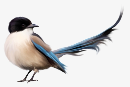Birds Hd PNG Images, Transparent Birds Hd Image Download.