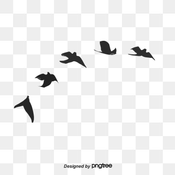 Bird PNG Images, Download 16,224 Bird PNG Resources with Transparent.