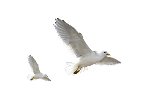 Free Flying Bird Png, Download Free Clip Art, Free Clip Art on.